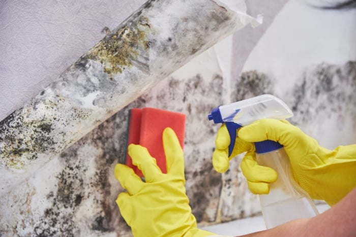 killing mold with vinegar and hydrogen peroxide