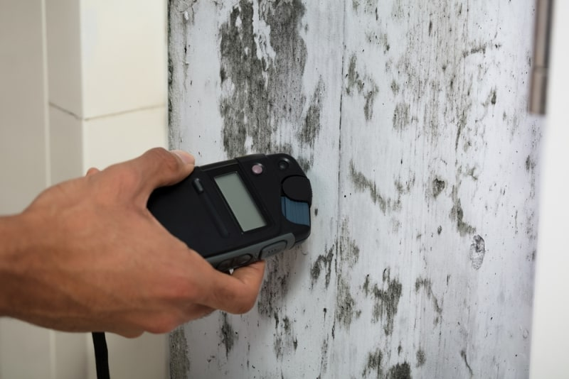 how to test for mold in house